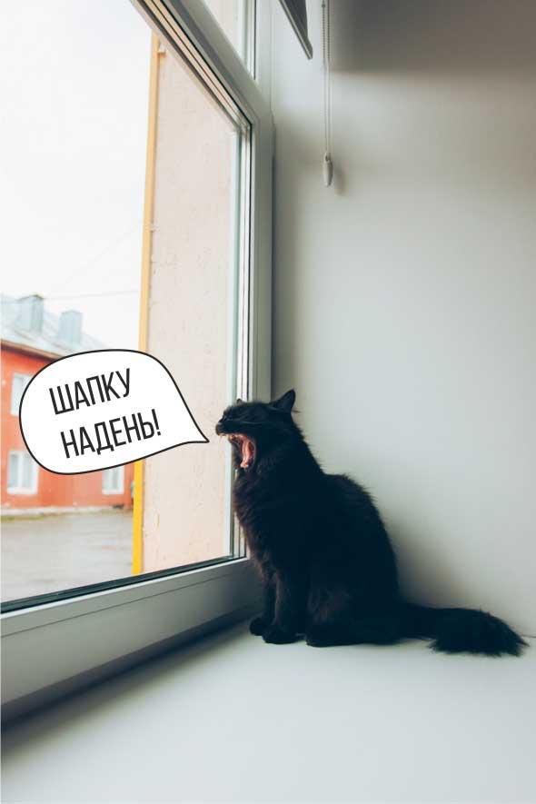 Кошка в отеле Паудер